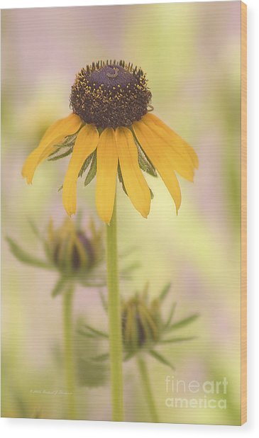 Black-eyed Susan Wood Print