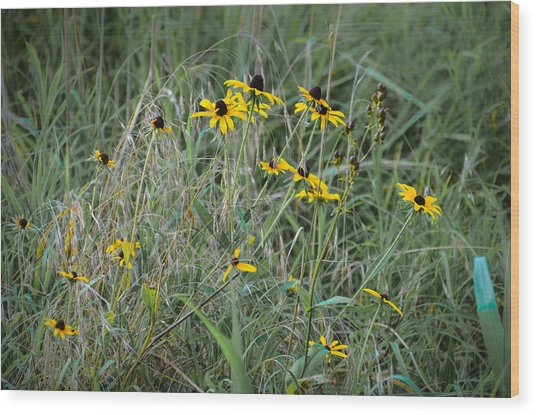 Black Eyed Susans At Antietam Maryland Wood Print