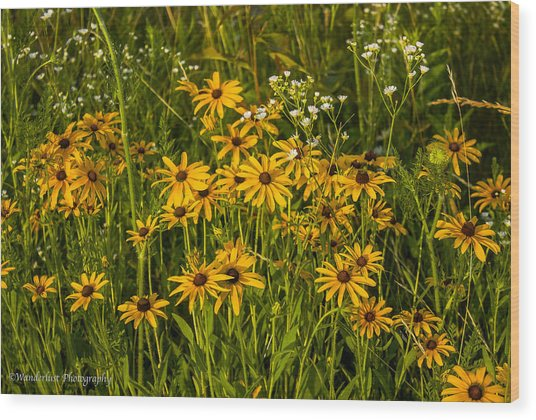 Black Eyed Susans Wood Print by Paul Herrmann
