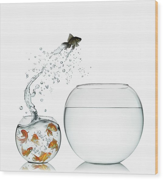 Black Goldfish Wood Print