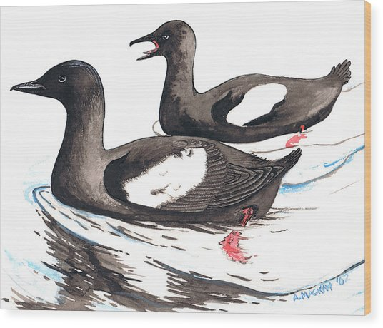 Black Guillemot Wood Print