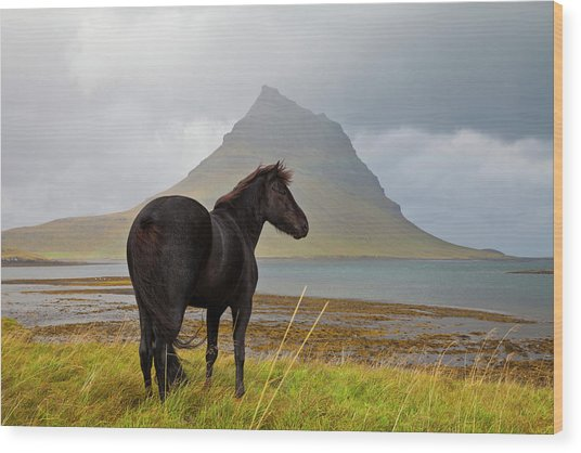Black Horse In Iceland Wood Print by Horstgerlach