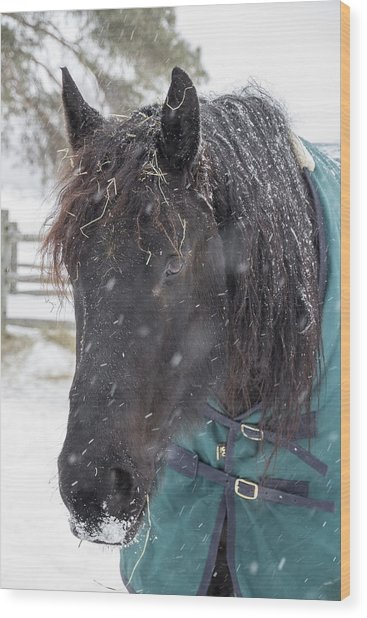 Black Horse In Snow Wood Print