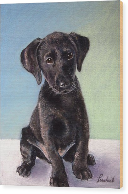 Black Labrador Puppy Wood Print by Prashant Shah
