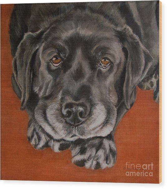 Black Labrador Rests Head Rescue Dog Wood Print