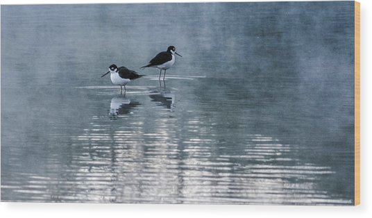 Black-necked Stilts Wood Print