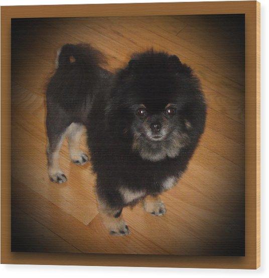Black Pom With Lion Cut Wood Print by Sanford