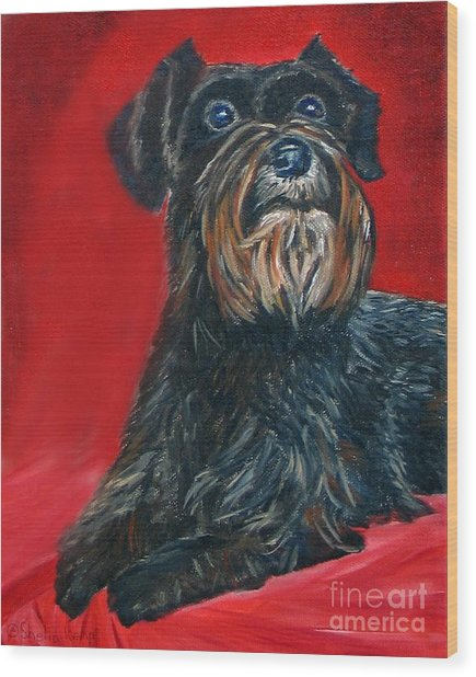 Black Schnauzer Pet Portrait Prints Wood Print