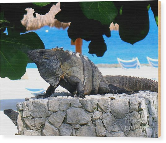 Wood Print featuring the photograph Black Spiny Tailed Iguana by Patti Whitten