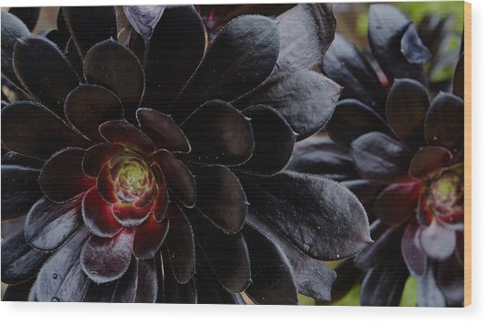 Black Succulent Wood Print