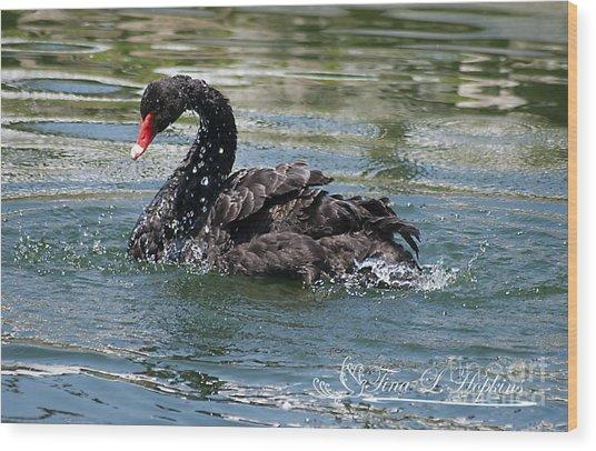 Black Swan 20120706_121a Wood Print