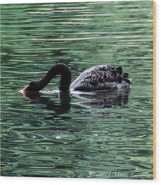 Black Swan II Wood Print by Marie  Cardona