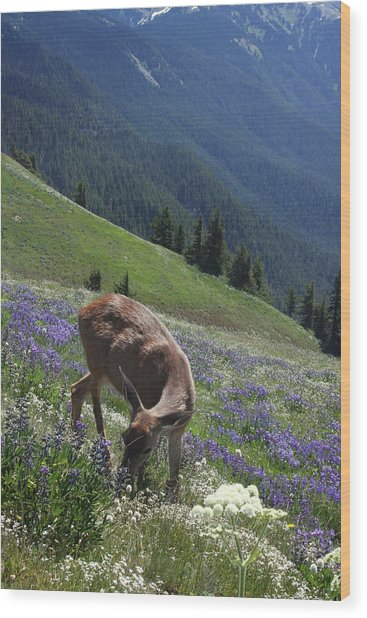 Black-tailed Deer And Lupines Wood Print