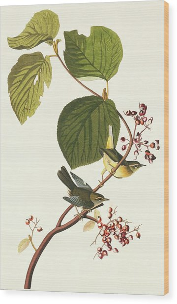 Black-throated Blue Warbler Wood Print by Natural History Museum, London/science Photo Library