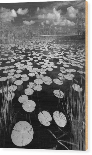 Black Water Wood Print