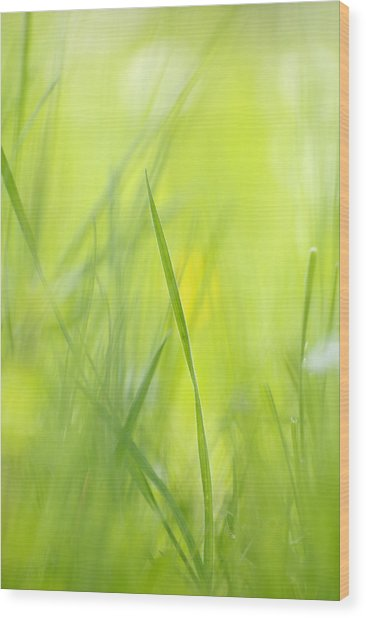 Blades Of Grass - Green Spring Meadow - Abstract Soft Blurred Wood Print