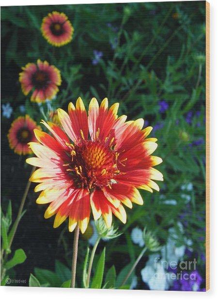 Blanket Flower Wood Print