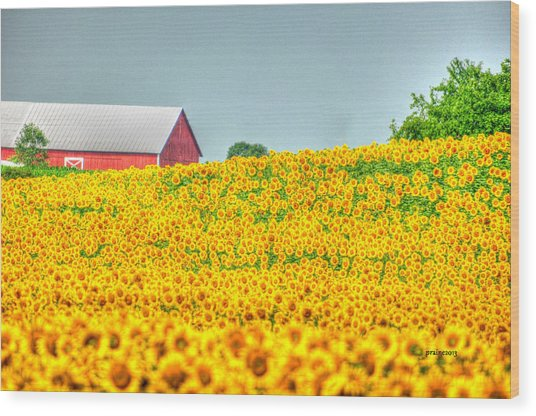 Blanket Flower Wood Print