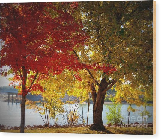 Blaze Of Color Wood Print by Mary Willrodt