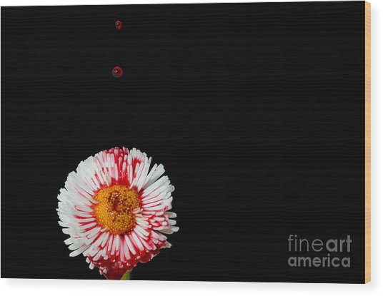 Bleeding Flower Wood Print