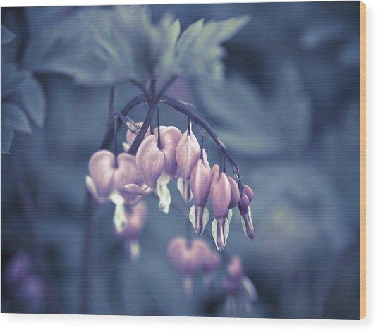 Bleeding Heart Flower Wood Print by Frank Tschakert