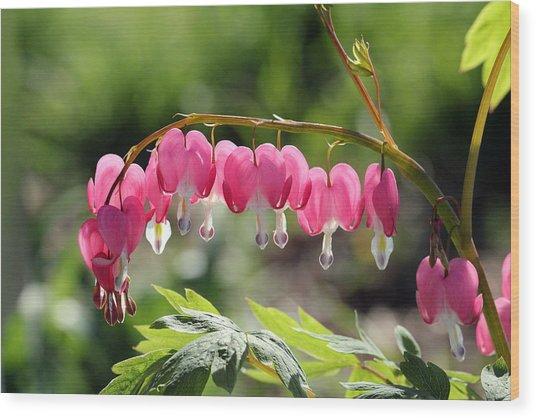 Bleeding Heart Flower Wood Print by James Hammen