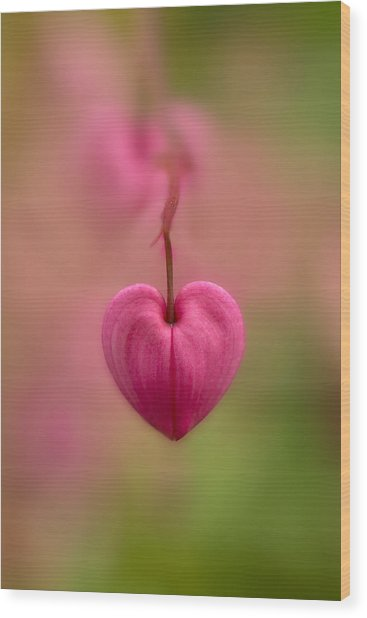 Bleeding Heart Flower Wood Print