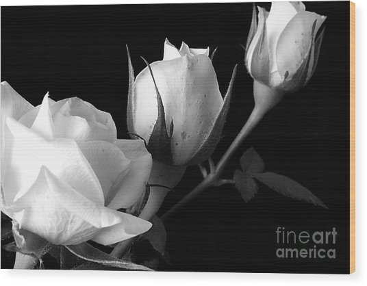 Bloomin' Roses Wood Print