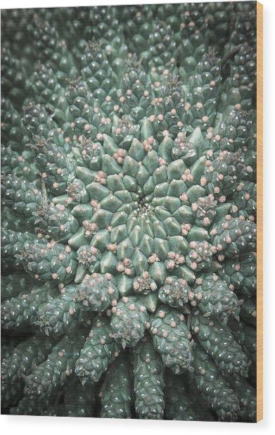 Blooming Geometry Wood Print