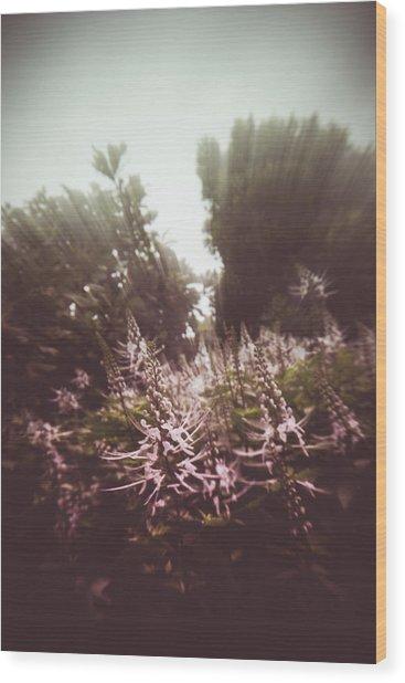Blooming Rays  Wood Print