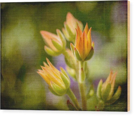 Blooming Succulents I Wood Print