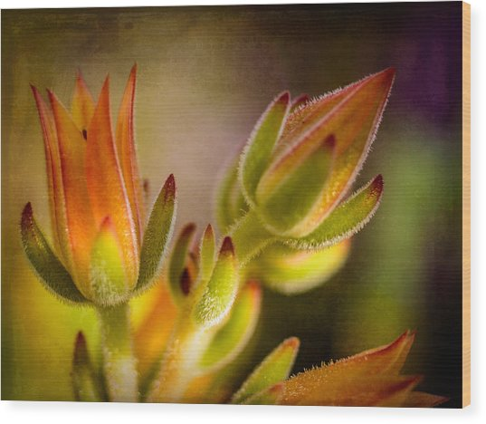 Blooming Succulents Iv Wood Print