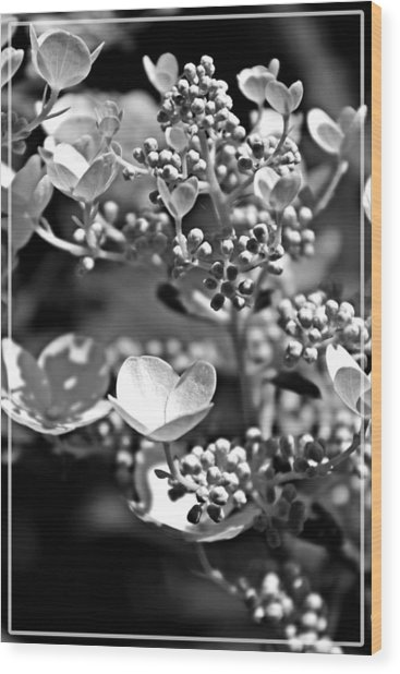 Blooms And Berries In Black And White Wood Print