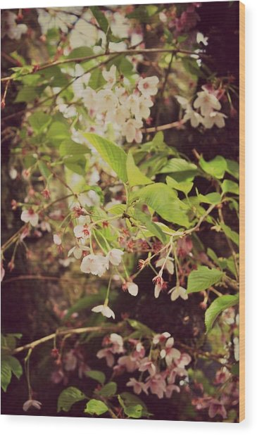 Blooms In The Branches Wood Print by Cathie Tyler