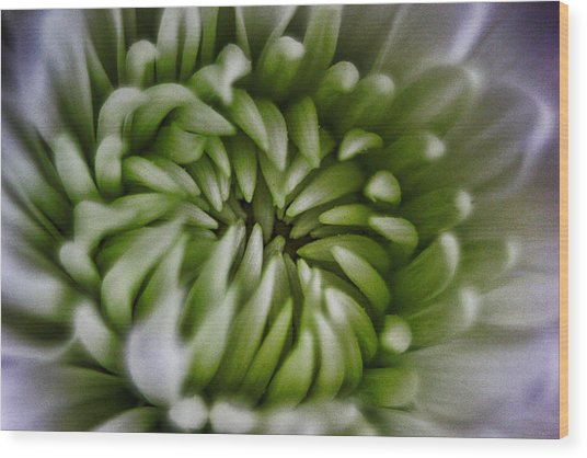Blooms Of Green Wood Print by Mkaz Photography