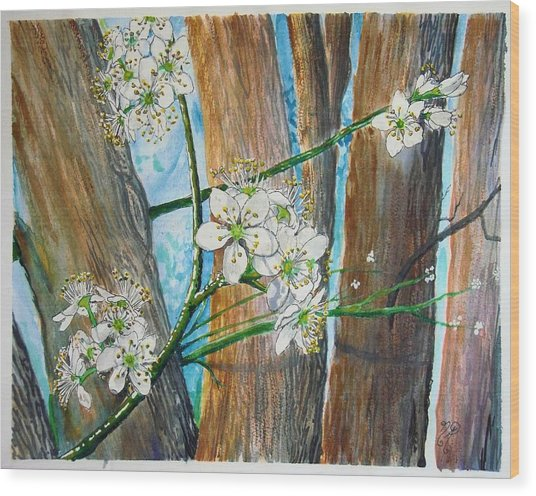 Blooms Of The Cleaveland Pear Wood Print