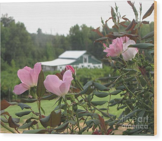 Blooms With The Barn Wood Print by Gayle Melges
