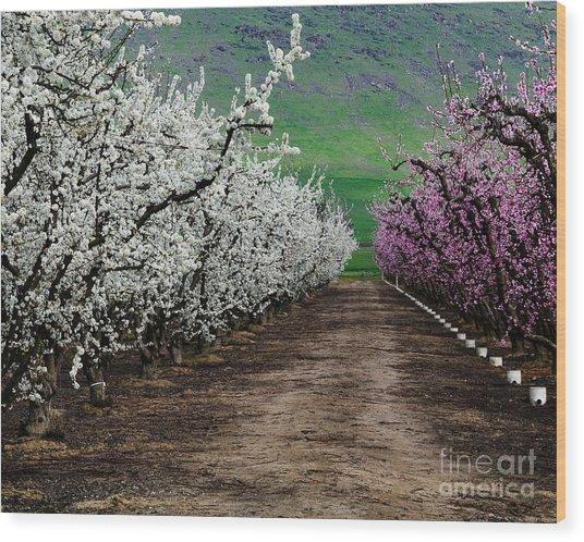 Blossom Standoff Wood Print