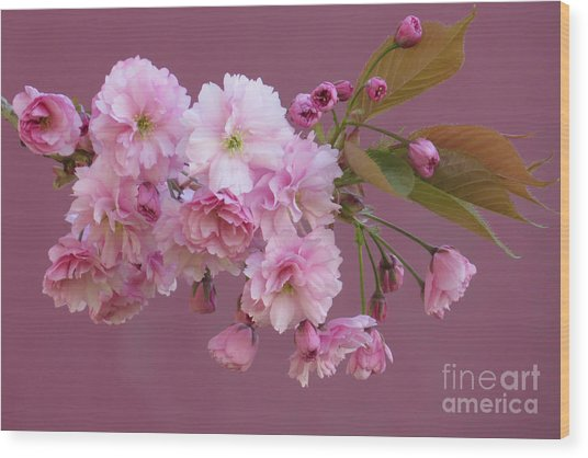 Blossom Standouts Wood Print by Frank Townsley