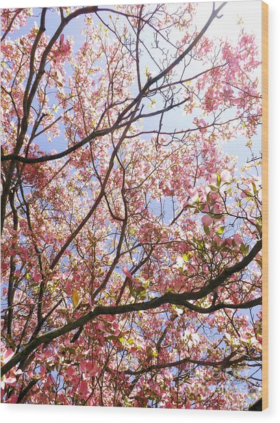 Blossoming Pink Wood Print