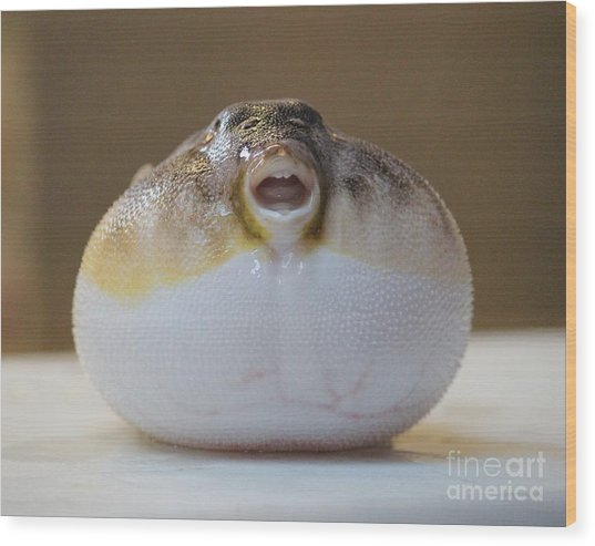 Blowfish Wood Print