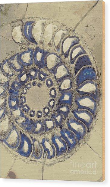 Blue Ammonite Wood Print by Joe Pratt