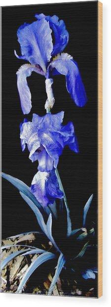 Blue Bearded Rhizomatous Irises Wood Print