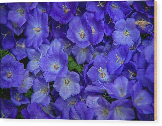 Blue Bells Carpet. Amsterdam Floral Market Wood Print
