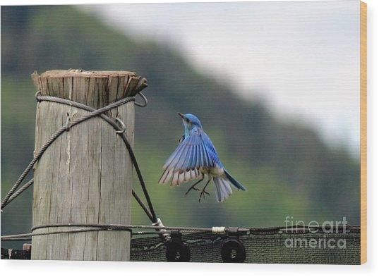 Wood Print featuring the photograph Blue Bird by Ann E Robson