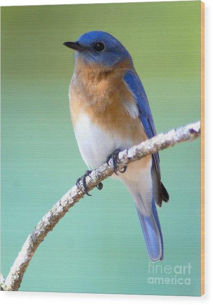 Blue Bird Portrait Wood Print