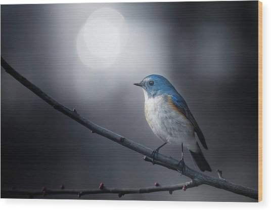 Blue Bird Wood Print