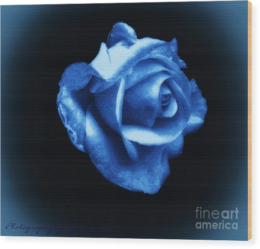 Blue Blue Rose Wood Print
