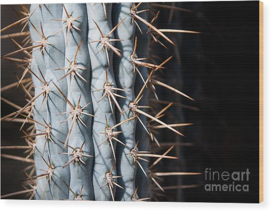 Wood Print featuring the photograph Blue Cactus by John Wadleigh