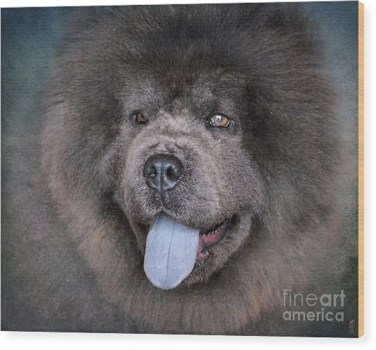 Blue Chow Chow Wood Print